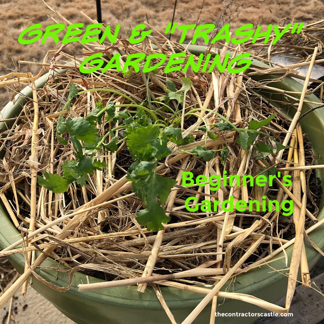 """""""Trash"""" Gardening"""