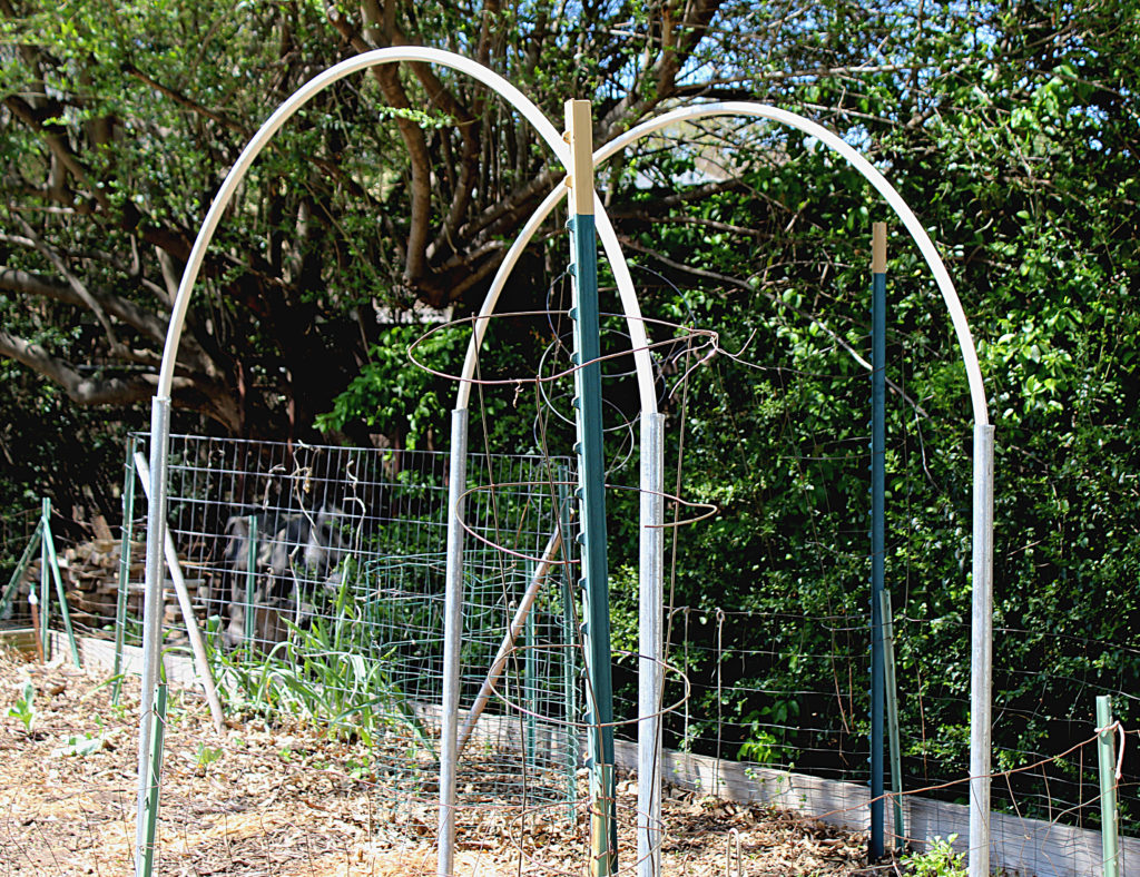 Basic trellis structure being built set in garden area.