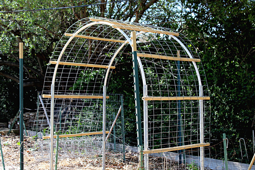 Almost completed garden vine trellis with wire mesh being draped over structure