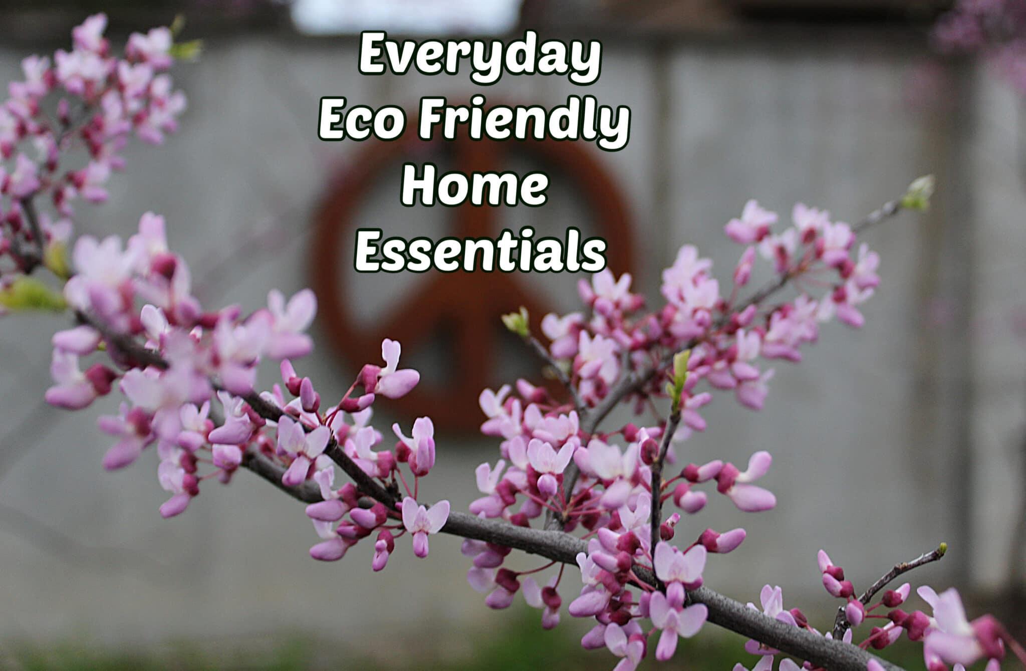 Eco Friendly Everyday Home Essentials
